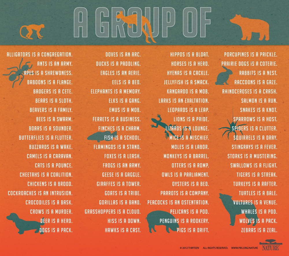What are the groups of animals